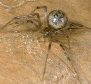 Kendale Lakes Spiders